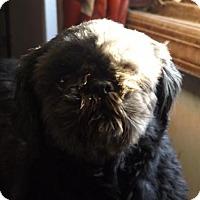 Adopt A Pet :: Ebony - Zaleski, OH