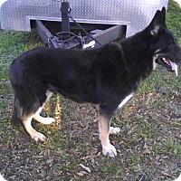 Adopt A Pet :: Baron - Inverness, FL