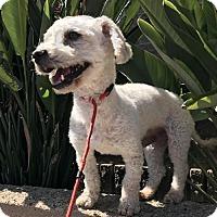 Adopt A Pet :: Lance - Costa Mesa, CA