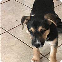 Adopt A Pet :: Sage - BONITA, CA
