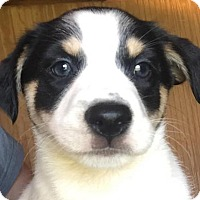 Adopt A Pet :: Single Lady - Brooklyn, NY