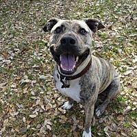 Adopt A Pet :: Rocky - Texas - Fulton, MO