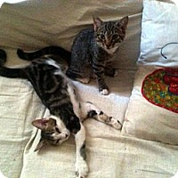 Adopt A Pet :: Chloe - Brooklyn, NY