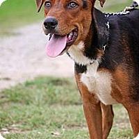 Adopt A Pet :: Bosley - Albany, NY