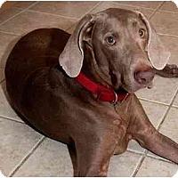 Adopt A Pet :: Max *Adoption Pending* - Eustis, FL