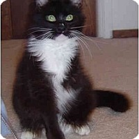 Adopt A Pet :: Timmie the Three Legged Wonder - Modesto, CA