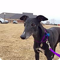 Adopt A Pet :: Monet - Oklahoma City, OK