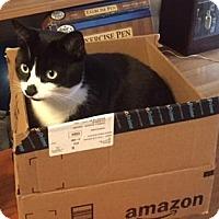 Adopt A Pet :: Eleanor - Brooklyn, NY