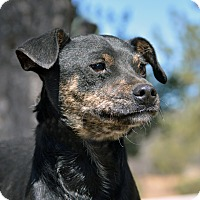Adopt A Pet :: Cody - Mountain Center, CA
