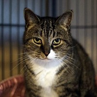 Adopt A Pet :: Penney - Bealeton, VA