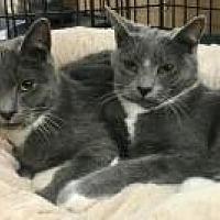 Adopt A Pet :: Claire and Clarice - Bear, DE