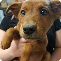 Adopt A Pet :: Blake - Ogden, UT