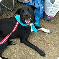 Adopt A Pet :: Roxie - Weatherford, TX