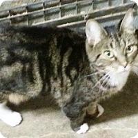 Adopt A Pet :: Sheba - Pasadena, CA