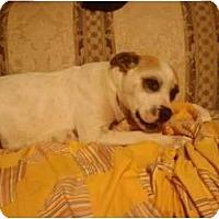 Adopt A Pet :: Tapanga- Courtesy Listing - Killen, AL