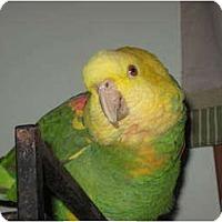 Adopt A Pet :: Buddy - Lenexa, KS