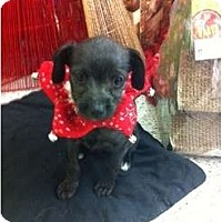 Adopt A Pet :: Bammie - Oceanside, CA