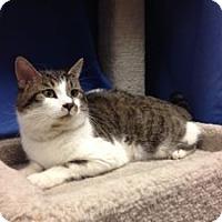 Adopt A Pet :: Harry - Colorado Springs, CO