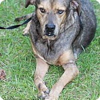Catahoula Leopard Dog Mix Dog for adoption in Covington, Louisiana - Doobie
