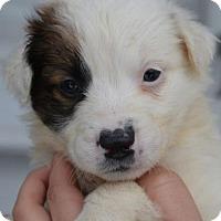 Adopt A Pet :: Marsha - Danbury, CT