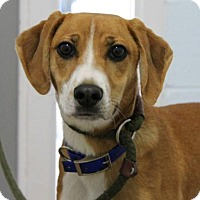 Adopt A Pet :: Lizzie - Spring Valley, NY