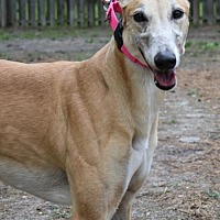 Adopt A Pet :: Free - Cherry Hill, NJ