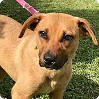 Adopt A Pet :: LAURA JO - Washington, DC