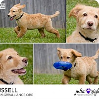 Adopt A Pet :: Russell #0607 - Fort Worth, TX