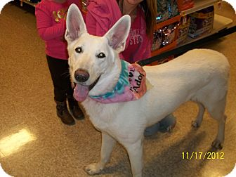 German Shepherd Dog Dog for adoption in Greeneville, Tennessee - Lily