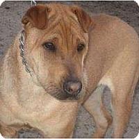 Adopt A Pet :: Charlie Brown - Bakersfield, CA