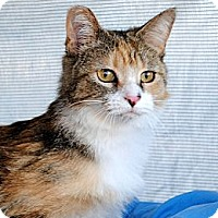 Adopt A Pet :: Smuckers - Palmdale, CA