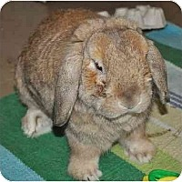 Adopt A Pet :: Guinness - Huntsville, AL