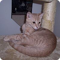 Adopt A Pet :: Holly - Richmond, VA