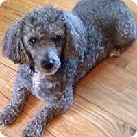Adopt A Pet :: Abe - Marietta, GA