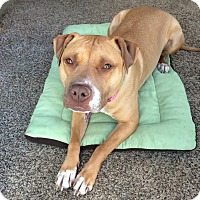 Adopt A Pet :: LULU: ADOPTED - Sterling, MA