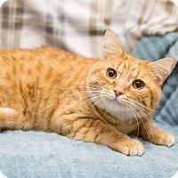 Adopt A Pet :: Oakley - Fountain Hills, AZ