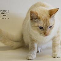 Adopt A Pet :: FIA - Houston, TX
