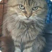 Adopt A Pet :: Michu - Naples, FL