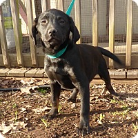 Adopt A Pet :: Beck - Newburgh, NY