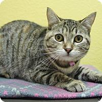 Adopt A Pet :: Caboodle - Benbrook, TX