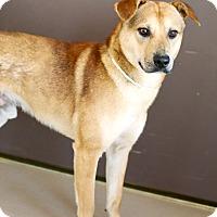 Adopt A Pet :: Calvin - Appleton, WI