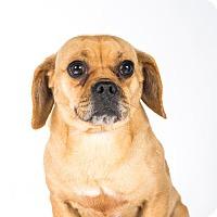 Adopt A Pet :: Tyra - St. Louis Park, MN