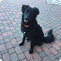 Adopt A Pet :: Burke - Edmonton, AB