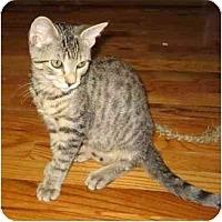 Adopt A Pet :: Isadora - New York, NY