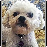 Adopt A Pet :: Penney - Ft. Bragg, CA