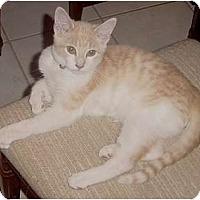 Adopt A Pet :: Nigel - Franklin, NC