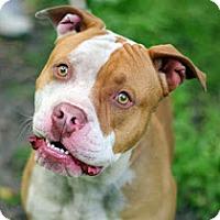 Adopt A Pet :: Barney - Tinton Falls, NJ