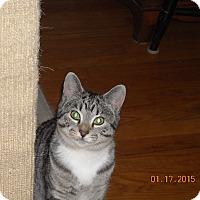 Adopt A Pet :: Madsion - Riverside, RI