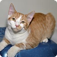 Adopt A Pet :: Squirrel - Medina, OH