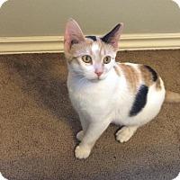 Adopt A Pet :: Destiny - Edmonton, AB